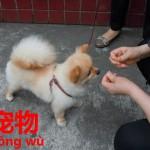 犬を食べずに飼いだした中国人。中国語で犬の種類の表現方法。ペット【宠物】