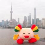 まぐまぐちゃんin上海。おのぼり観光。東方明珠【东方明珠】