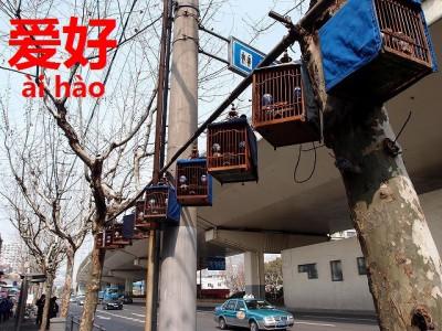 中国の街に並んだ鳥かご