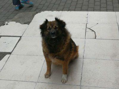 戌年の野良犬