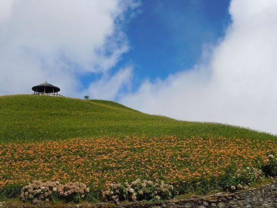 頂上の金針花